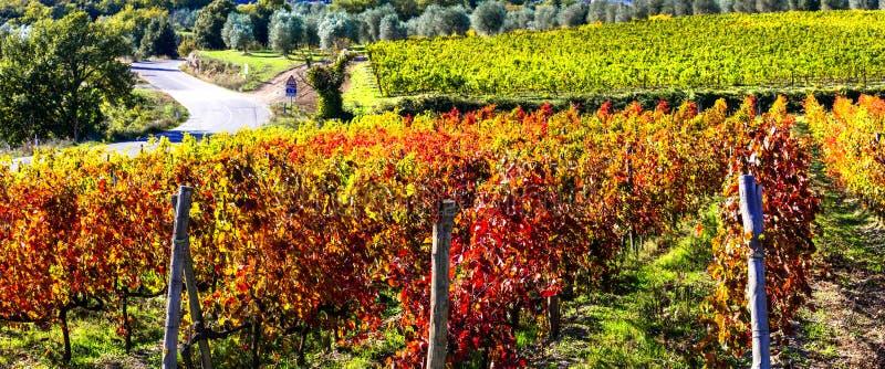 秋天风景-托斯卡纳,意大利的美丽的葡萄园 库存照片
