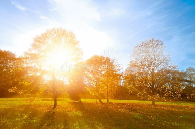 秋天风景-被染黄的秋天公园在秋天晴朗的晚上 日落公园五颜六色的秋天视图有光束的 库存照片