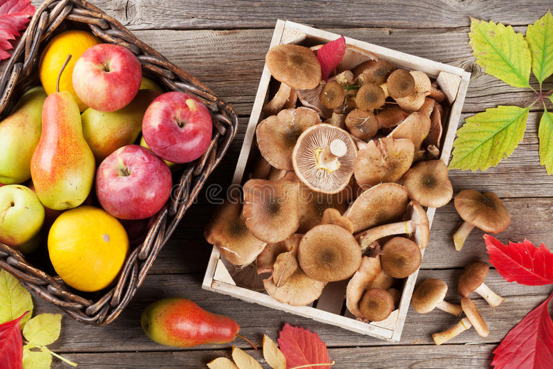 秋天食物 蘑菇和果子 库存照片