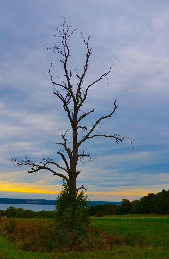 秋天黄纹树影 库存图片