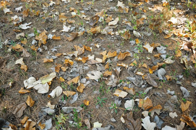 秋天黄色叶子在地面上驱散 免版税库存照片