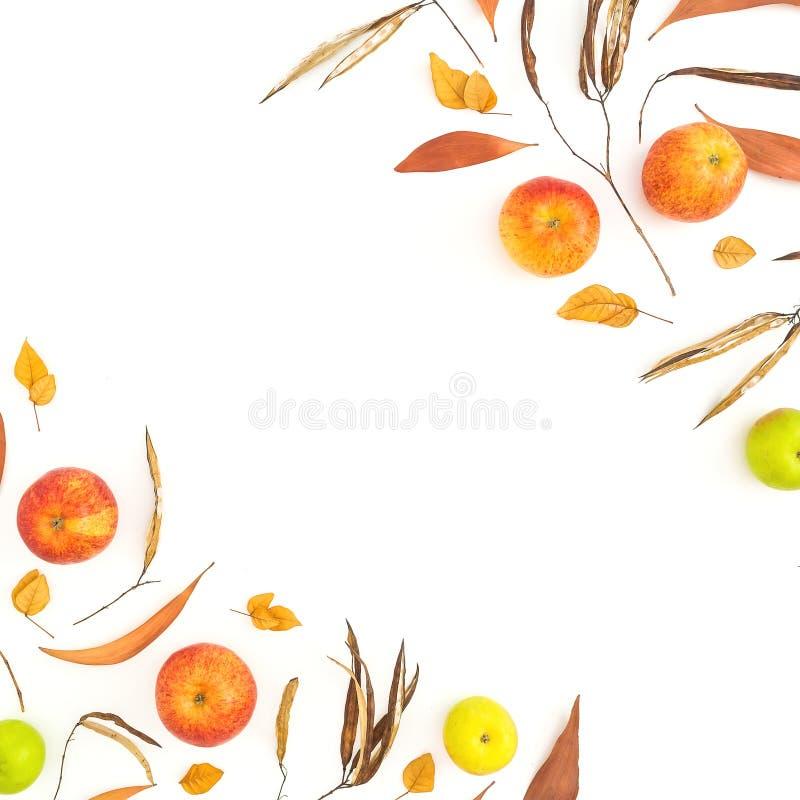 秋天黄色和红色苹果秋天框架在白色背景结果实 平的位置,顶视图 感恩日 免版税库存图片