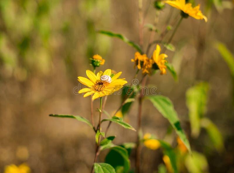 秋天黄色花和蜗牛 库存照片
