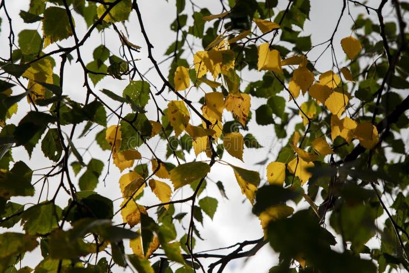秋天,它的与板料的树 免版税库存照片