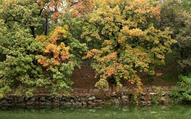 秋天,树,离开 免版税库存照片