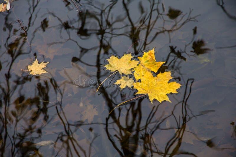 秋天,落叶 库存图片