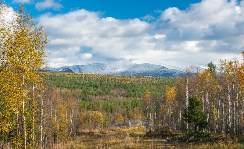 秋天,黄色树 在雪的山 库存图片