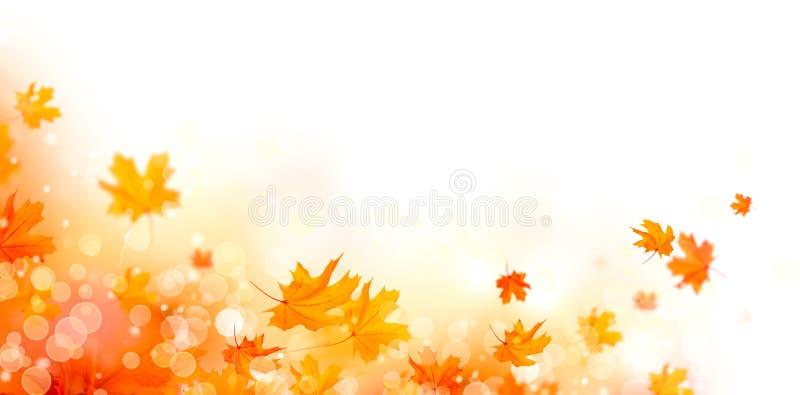 秋天 与五颜六色的叶子和太阳的秋天抽象背景飘动 库存例证