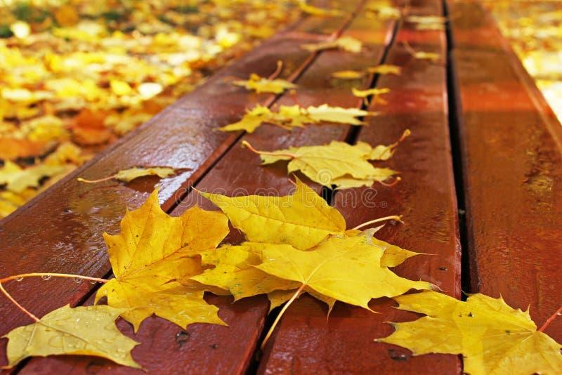 秋天 在一条长凳的秋叶在公园 免版税库存照片