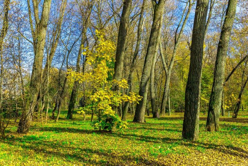 秋天晴天在有五颜六色的槭树的公园 库存照片