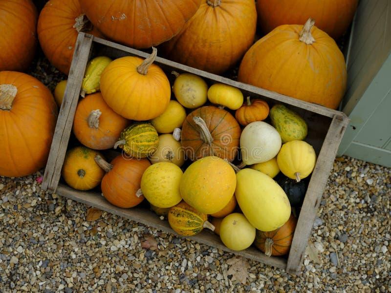 秋天-收获节日-万圣节-感谢给:南瓜、骨髓,海地的货币单位和其他的一个五颜六色的安排 免版税图库摄影