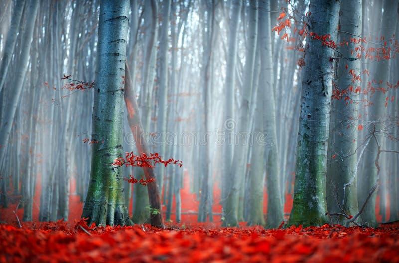 秋天 秋天横向 有明亮的红色叶子和老黑暗的树的美丽的秋季公园 秀丽本质 库存图片