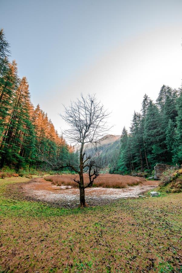 秋天-美丽的deodar森林在马纳利,喜马偕尔邦,印度 库存照片