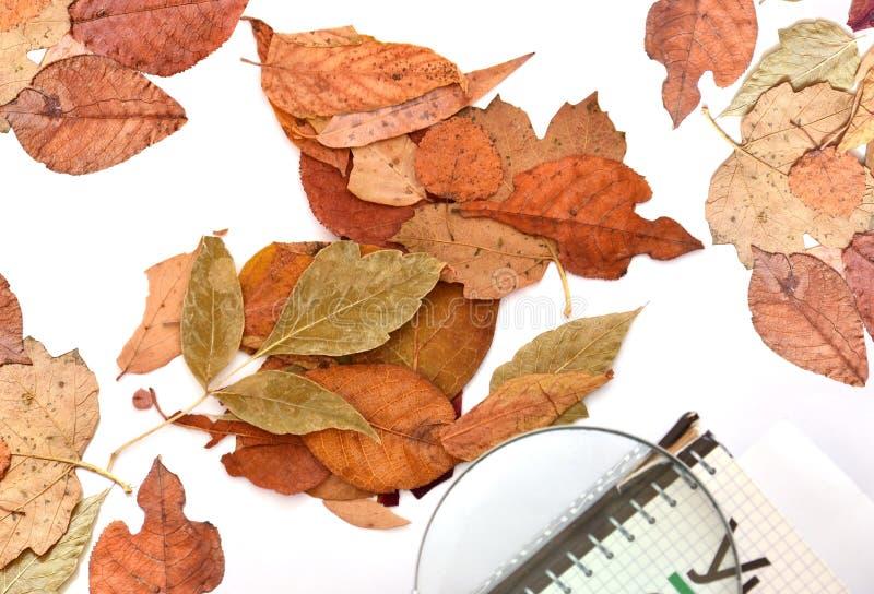 秋天黄色叶子  课本和放大镜 在一个轻的背景 库存图片