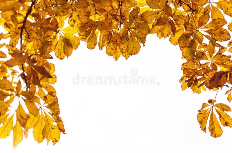 秋天黄色叶子 免版税库存照片