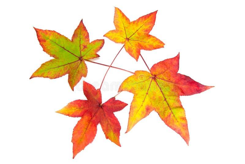 秋天绿色留下红色黄色 库存照片