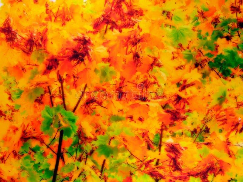 秋天黄色的例证在树离开 与音调的显示的图片 向量例证