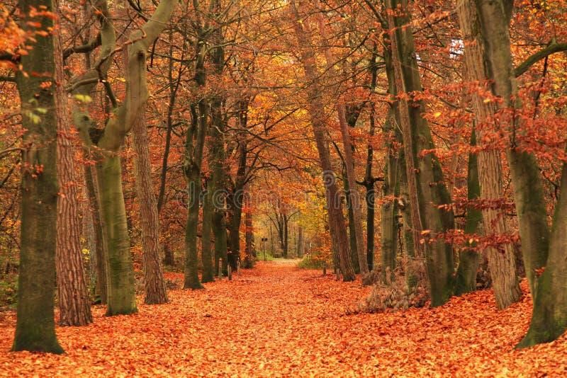 秋天绿色路星期日结构树天气黄色 免版税图库摄影