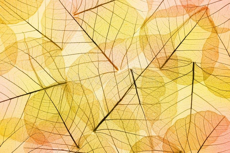 秋天-透明叶子背景的颜色 库存照片