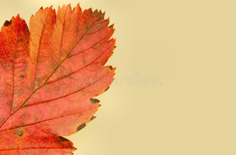 秋天#5的颜色 库存照片