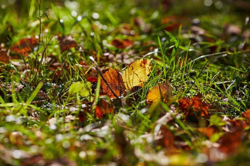 Download 秋天 库存照片. 图片 包括有 叶子, 上色, 槭树, 本质, 关闭, 万圣节, 自治权, 感恩, beauvoir - 62528170