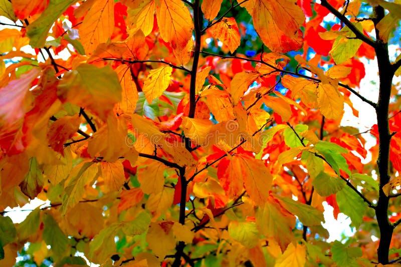 Download 秋天 库存图片. 图片 包括有 腐朽, 本质, 季节, 五颜六色, 朽烂, 有机, 自治权, beauvoir - 62530545