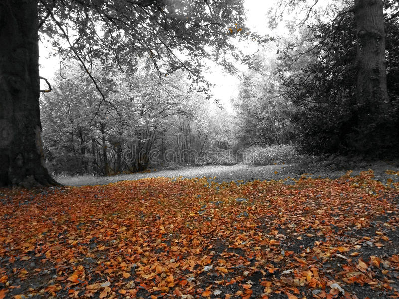 Download 秋天 库存照片. 图片 包括有 划分为, 自治权, 叶子, 结构树, 森林地 - 72366782
