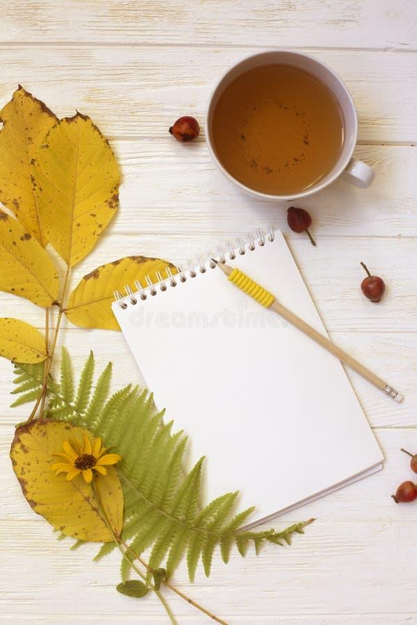 秋天flatlay在与一杯茶的白色木背景和f 库存图片