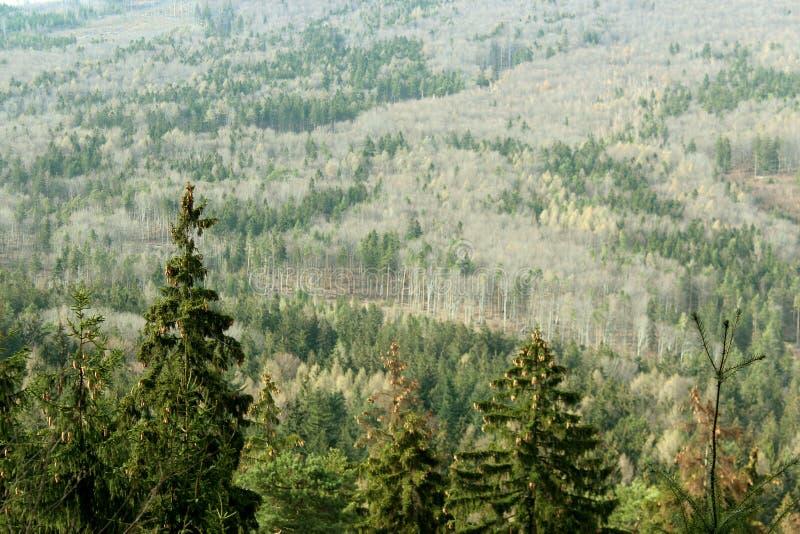 秋天moutain森林 免版税库存图片