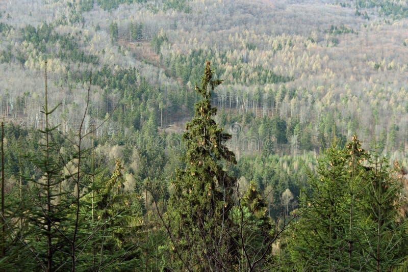 秋天moutain森林 库存图片