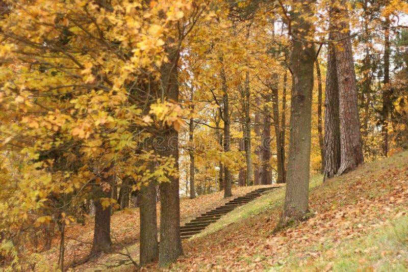 秋季公园在爱沙尼亚Toila 免版税图库摄影