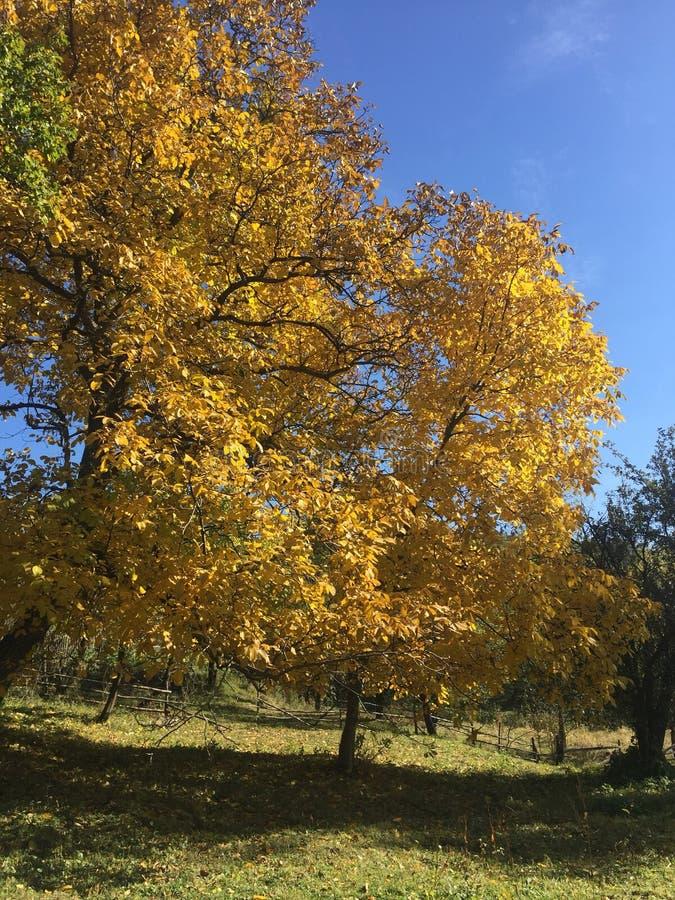 秋季天在一个狂放的地方 免版税库存图片