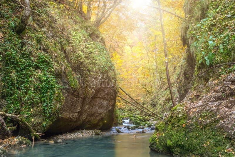秋季小河 库存图片