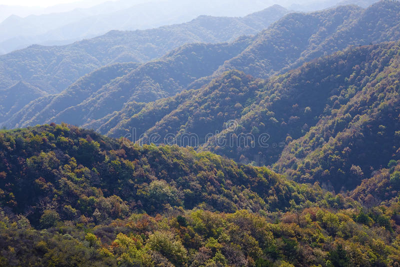 秋季山森林 图库摄影