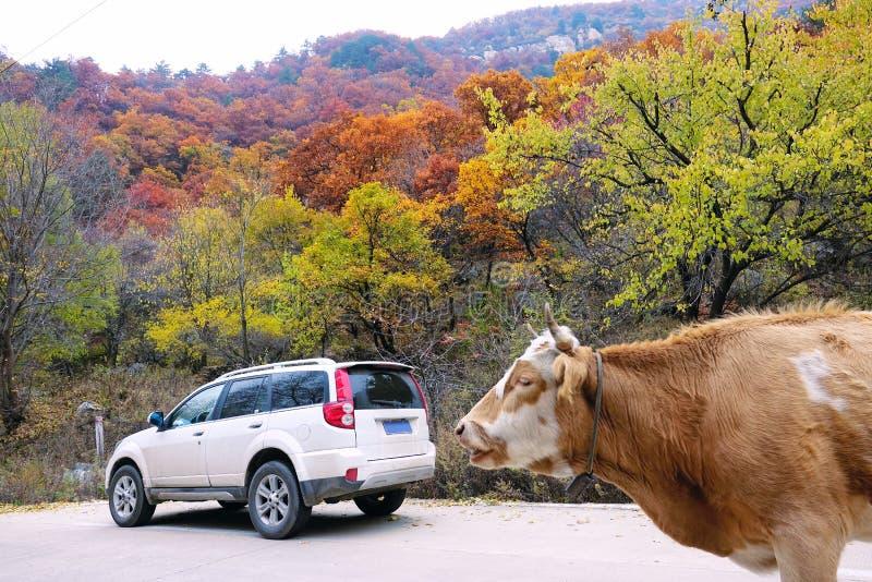 秋季山风景 库存照片
