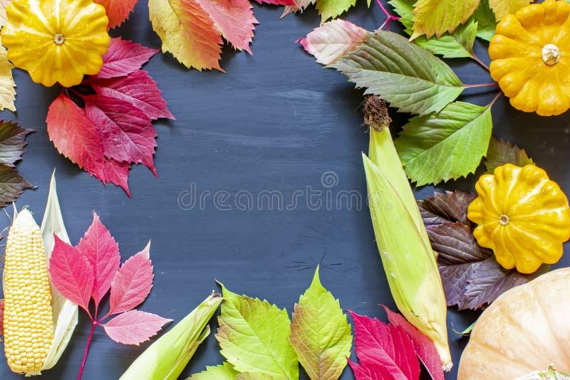 秋季或感恩节背景,在深色木桌上装饰南瓜、玉米、枫叶,收获静物组合物 免版税库存照片