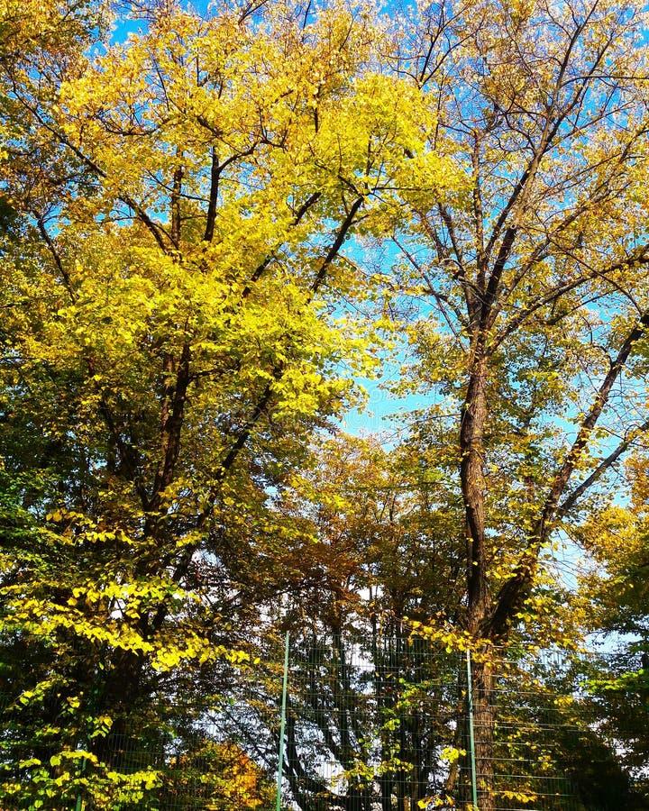秋季日留下忧郁黄色 免版税库存照片