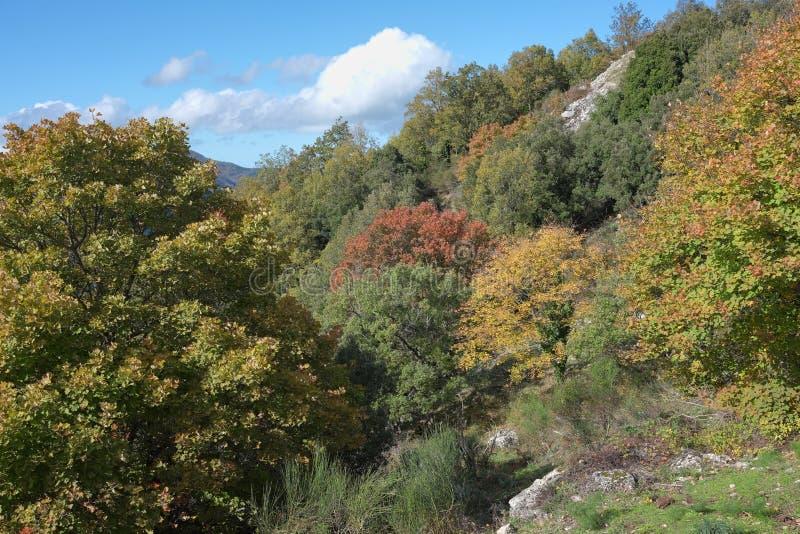 秋季森林在Nebrodi公园,西西里岛 库存照片