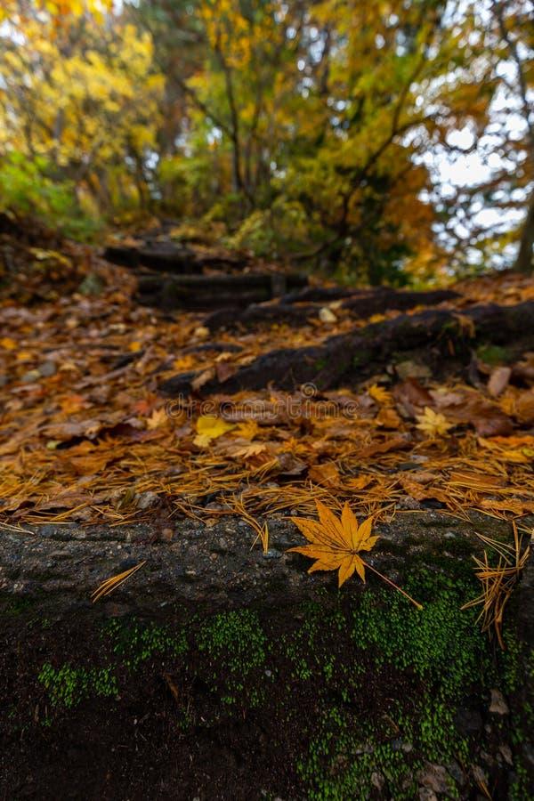 秋季步道 库存图片