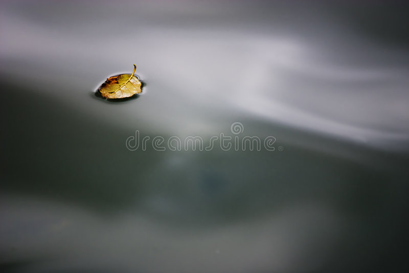 秋季浮动的叶子水 库存图片