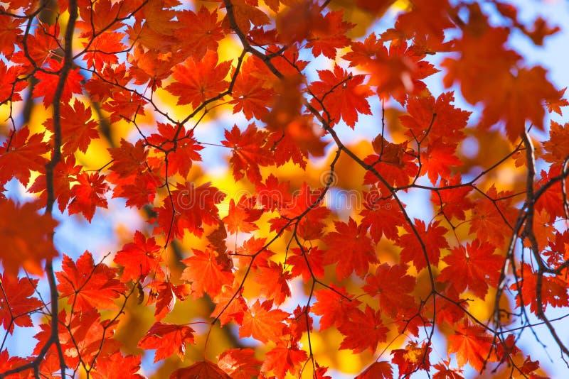秋季的丰盈 免版税图库摄影