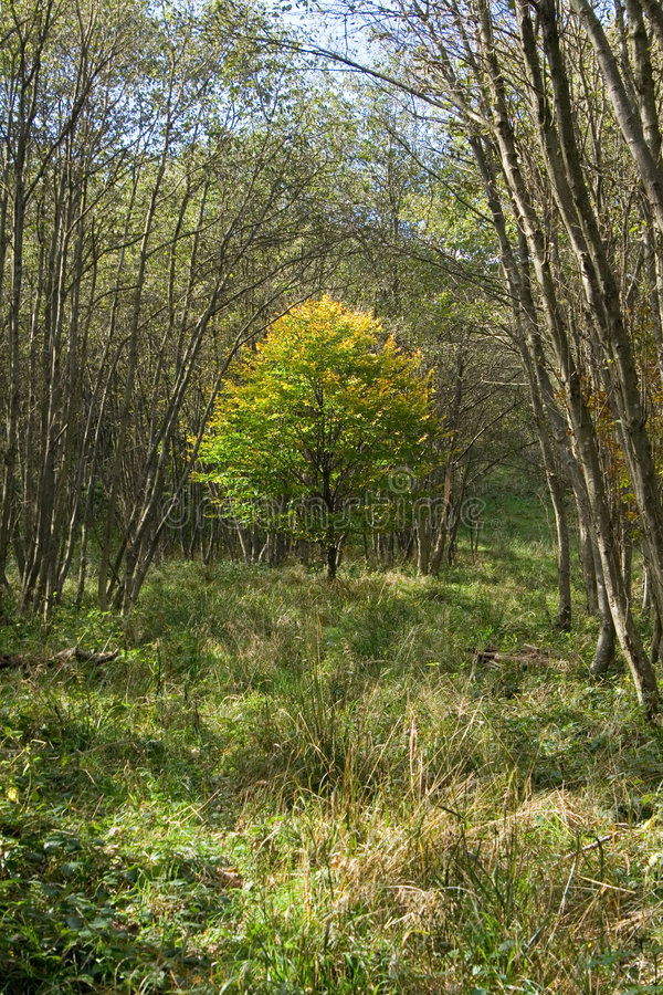 秋季秋天森林横向 免版税库存照片