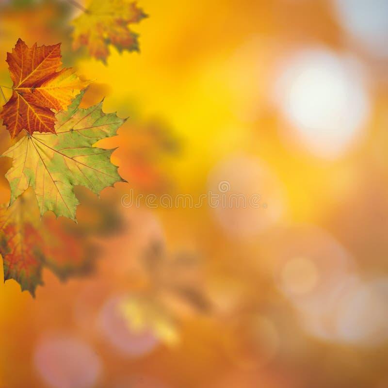 秋季秋天 美好的季节性背景 免版税库存照片