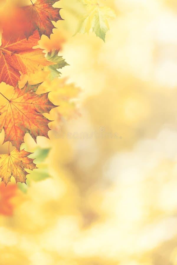 秋季秋天 美好的季节性背景 库存照片