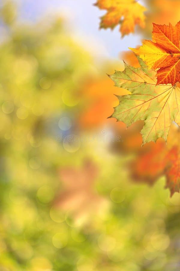 秋季秋天 美好的季节性背景 免版税库存图片