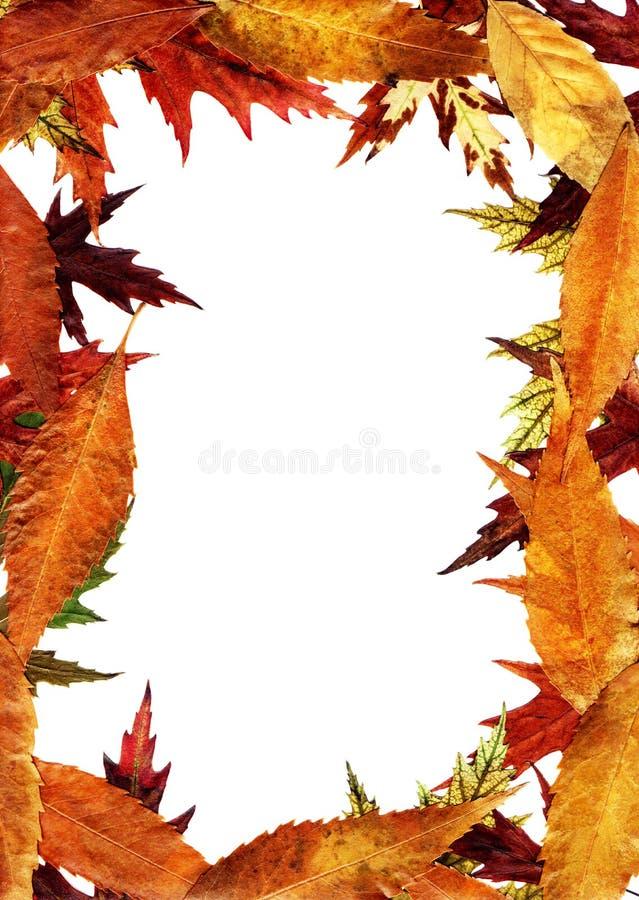 秋季结构 免版税库存照片