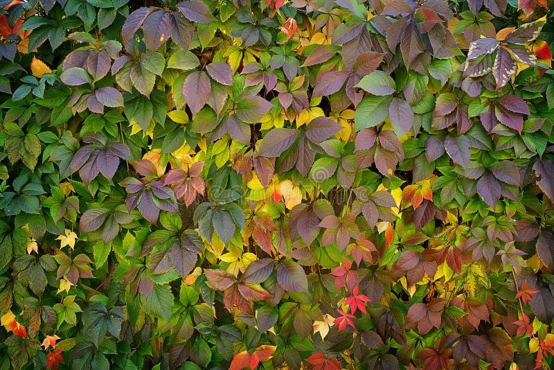 黄绿秋季背景 库存照片