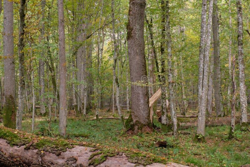 秋季自然落叶林 免版税图库摄影