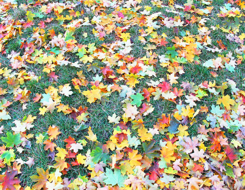 秋季草坪 免版税库存照片