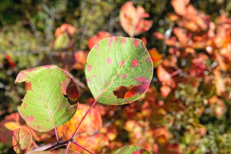秋季被毁坏的叶子 免版税图库摄影